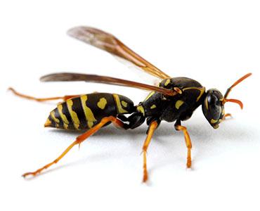 パニック状態  「  蜂 はち ハチ」