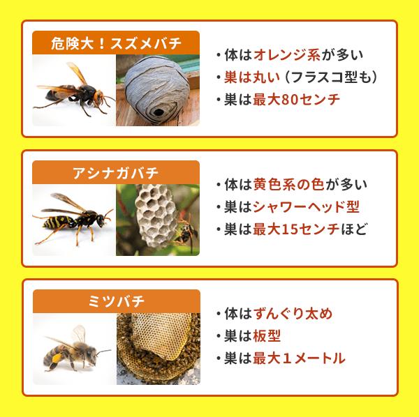 ハチの種類と特徴:見分け方と危険性を知る