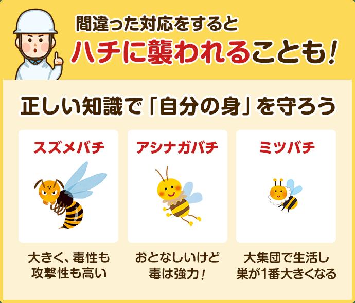 毒性 アシナガバチ