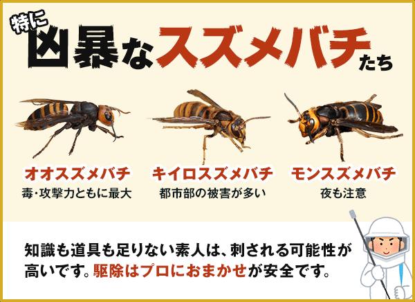 スズメバチ オリエント